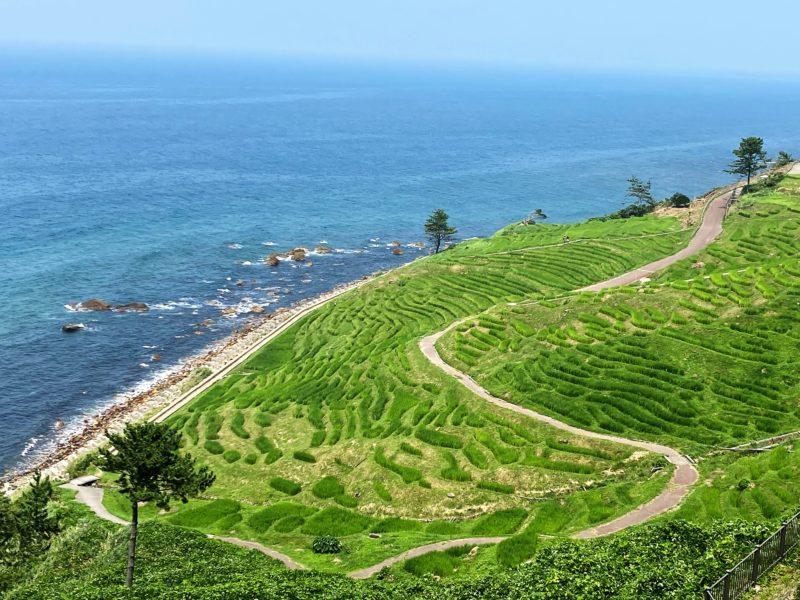 「白米千枚田~日本初の世界農業遺産~日本の原風景」のアイキャッチ画像