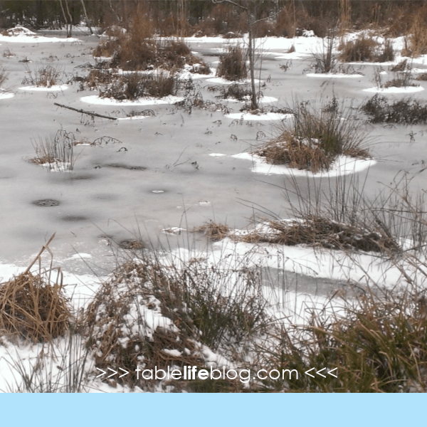 3 Simple Ways to Explore Nature When Winter Comes (+ FREE Printable Winter Scavenger Hunt!)