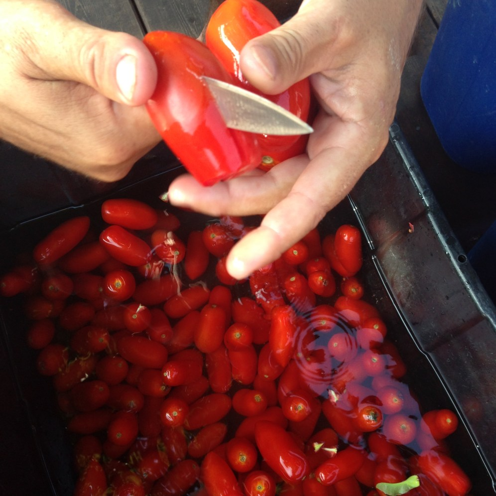 Slice the tomatoes to make them easier to feed into the grinder