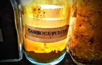 yellow gamboge violin varnish