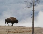 Yellowstone-2834