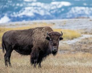 Yellowstone-3457