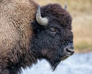 Yellowstone-3494
