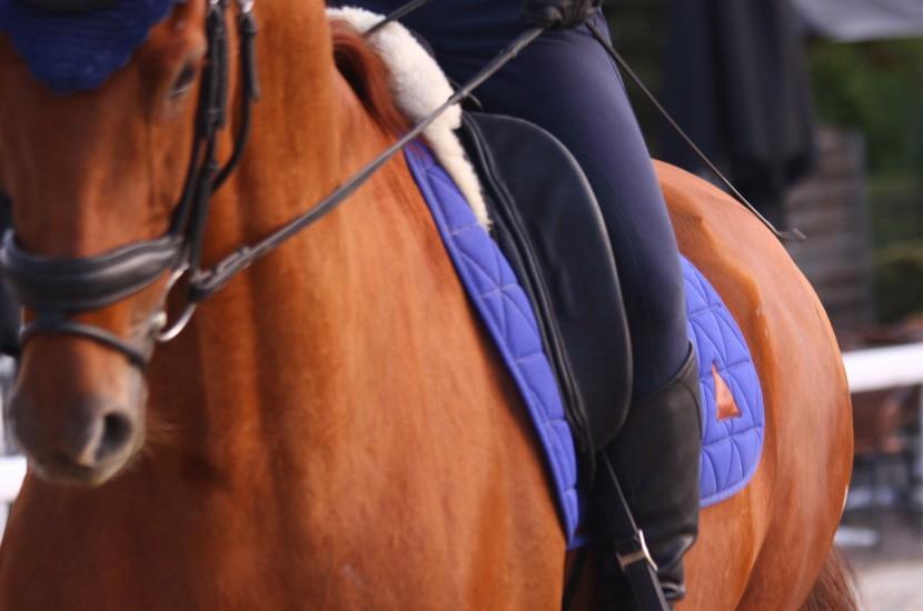tapis de selle excel anse dressage bleu roi