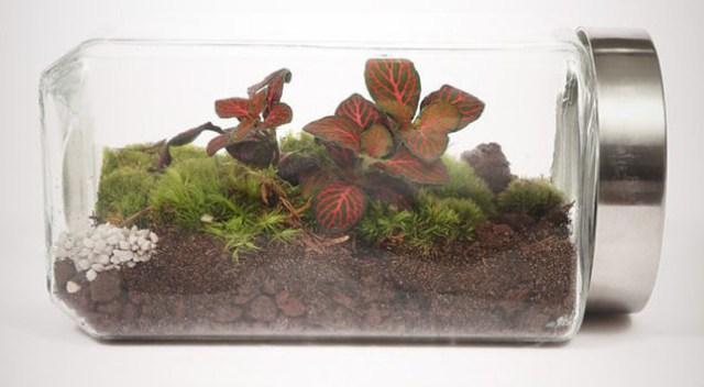 11-he-sinh-thai-terrarium-cho-phep-cay-xanh-phat-trien-doc-lap1