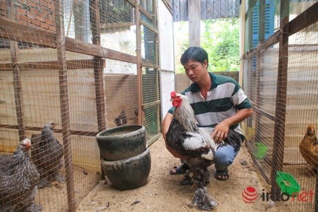 Theo anh Lê Ngọc Phước (chủ trại gà ở quận 12) thì giống gà kỳ lân, hay còn gọi là gà Brahma được anh nuôi khoảng 1 năm nay. Ban đầu anh thử sức với giống gà Đông Tảo, nhưng qua một thời gian do có nhiều người nuôi nên anh chuyển sang giống gà kỳ lân khổng lồ này. Anh cho biết, tại TP.HCM thì anh là người đầu tiên nuôi giống gà quý này.