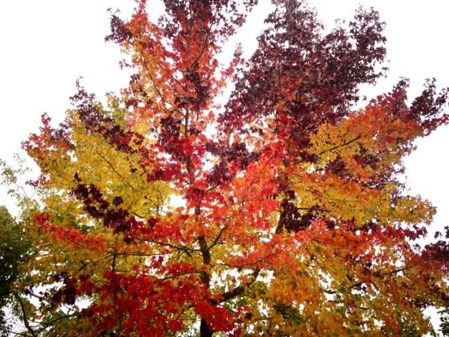 tache de rousseur blog voyage copenhague automne