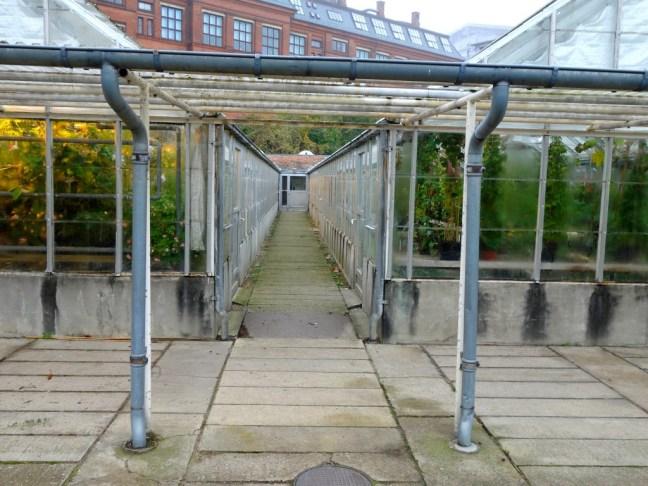 tache de rousseur blog voyage copenhague jardin botanique5
