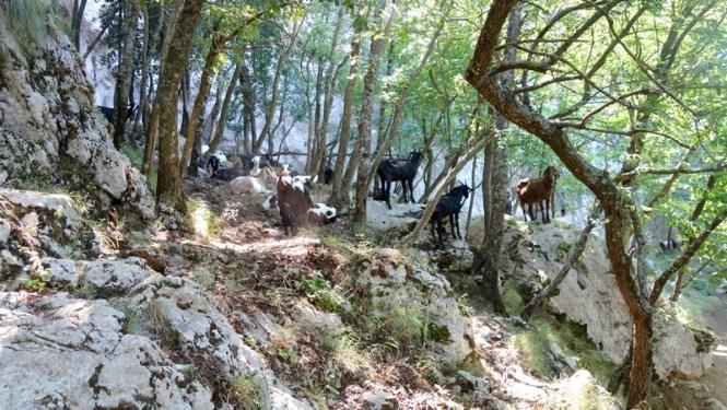 ITALIE 2015 - Cote Amalfitaine - Blog voyage Tache de Rousseur (51)
