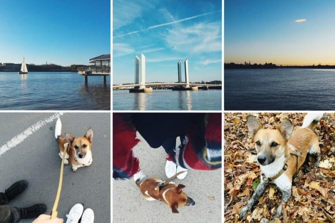 Favoris de novembre 2015 - Promenades dominicales à Bordeaux avec Jax