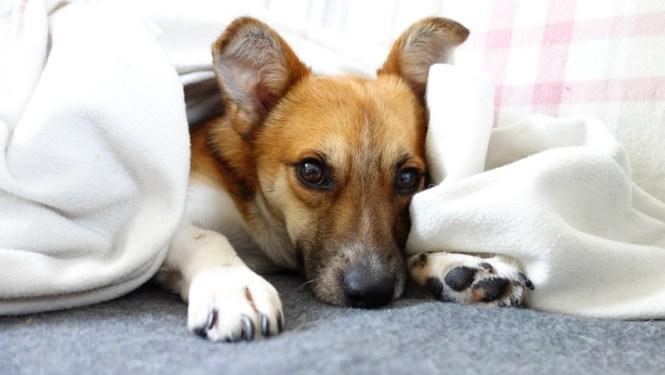 Adopter un chien en appartement - Blog Tache de Rousseur