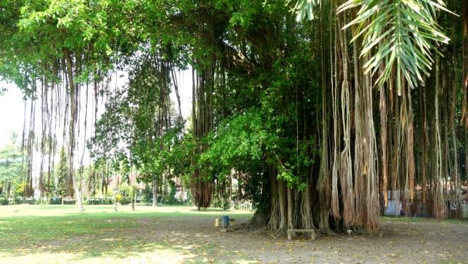 Blog voyage Indonésie - Jogjakarta, Borobudur et Prambanan