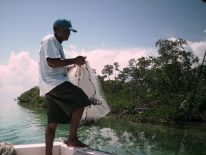 Getting sardines
