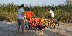 Buying coconut Paletas