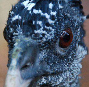 Belize bird facts