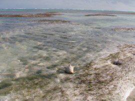 Belize's Best Kept Secret