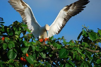 Belize A Great Destination Explorer's Guide published by The Countryman press