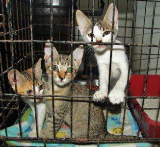 Saga Humane Society  Belize