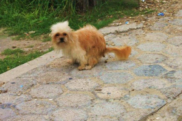 dog control act and belize law