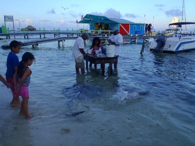 San pedro belize beach bars belize beach ambergris caye for Fishing san pedro belize