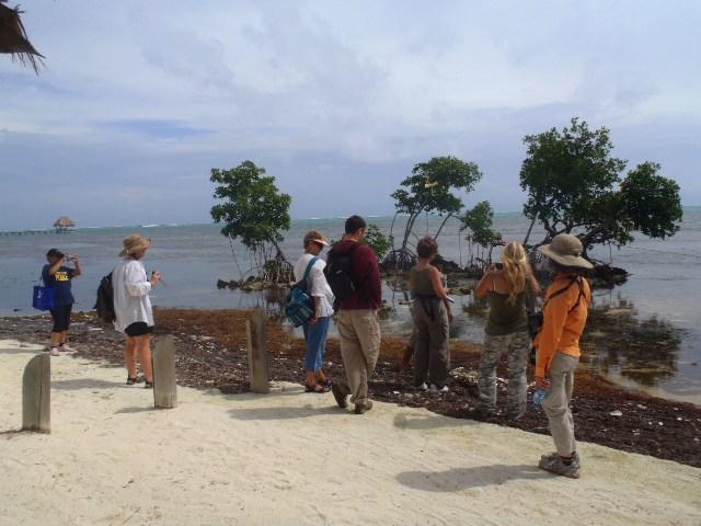 mangrove transplanting projects