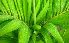 tropical belize