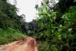 belize road