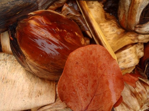 belize coconuts