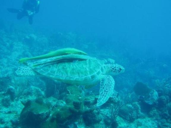 mexico snorkeling
