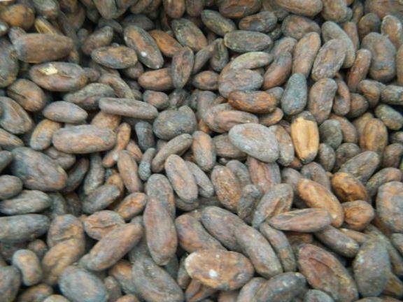 fair trade chocolate san pedro belize
