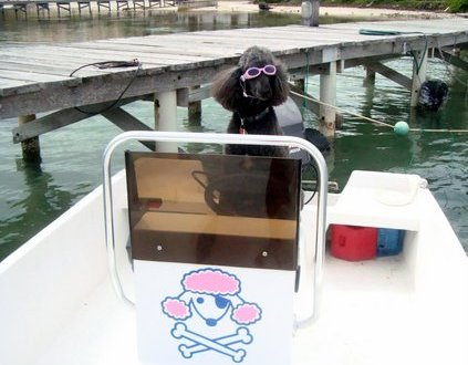 Captain Pudlin in action and a Glass bottom boat review