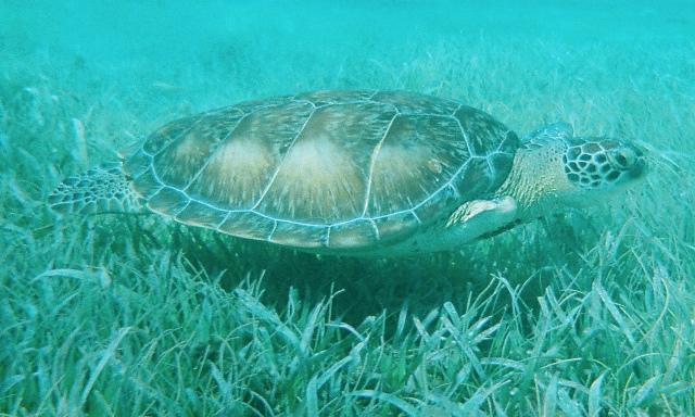hole chan marine reserve ambergris caye belize