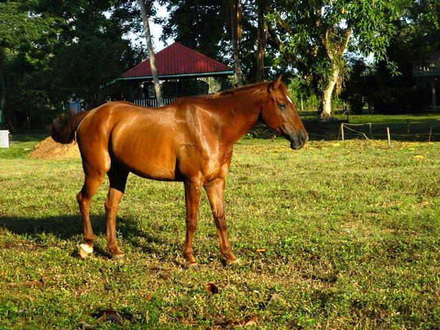 horse riding belize