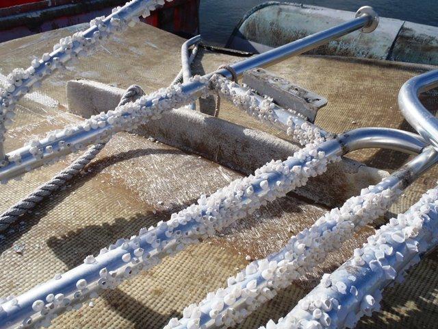 capt sharks boat yard san pedro belize
