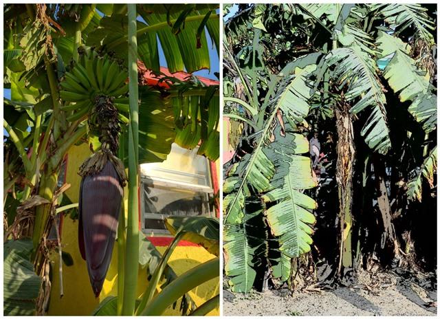 DFC area San Pedro Belize