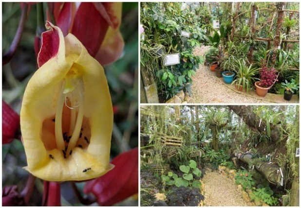 Botanical Garden at Ian Anderson's Caves Branch