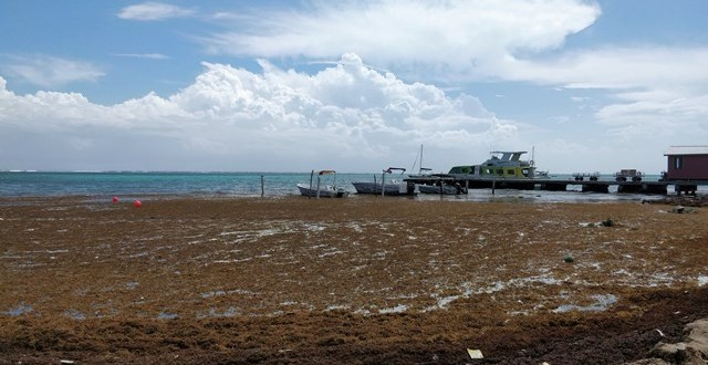 The Difference Between Sargasso and Seagrass