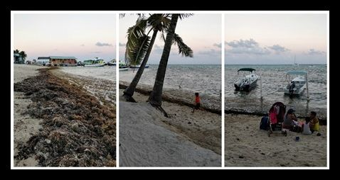 Difference Between Sargasso and Seagrass in Belize