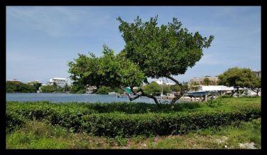 Lagoon Side Ambergris Caye Island