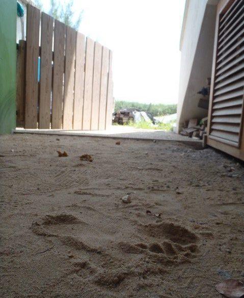 Belize neighborhood watch