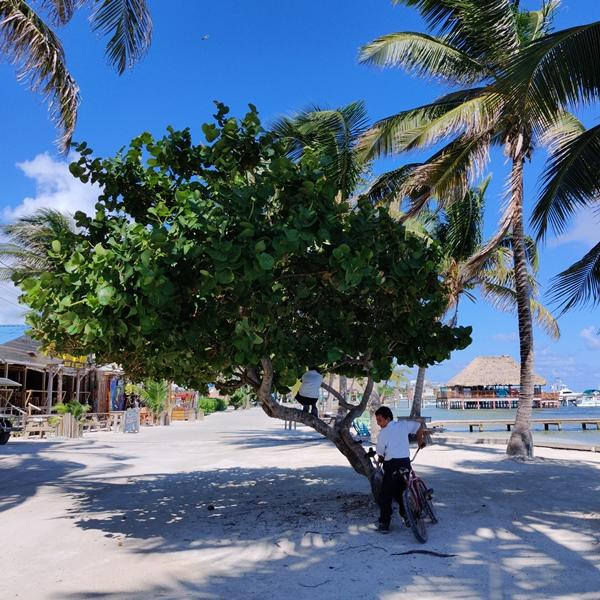 Living in San Pedro Belize