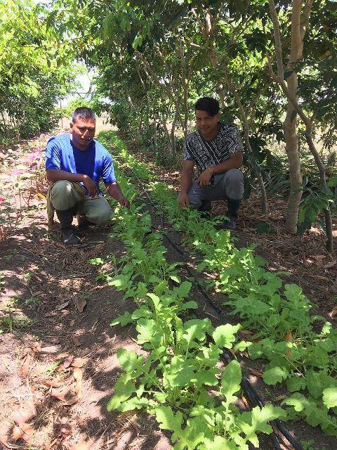 Kunahmul Organics Farm Belize