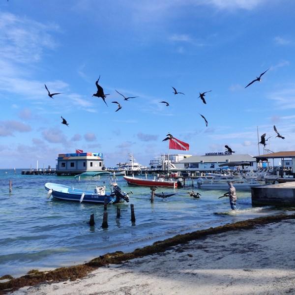 fishermen cleaning catch on beach walk san pedro
