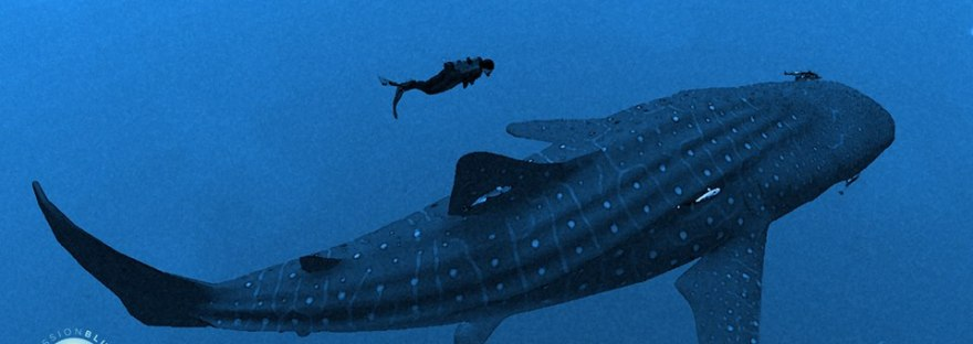 Infinite Scuba virtual reality diver with whale shark.