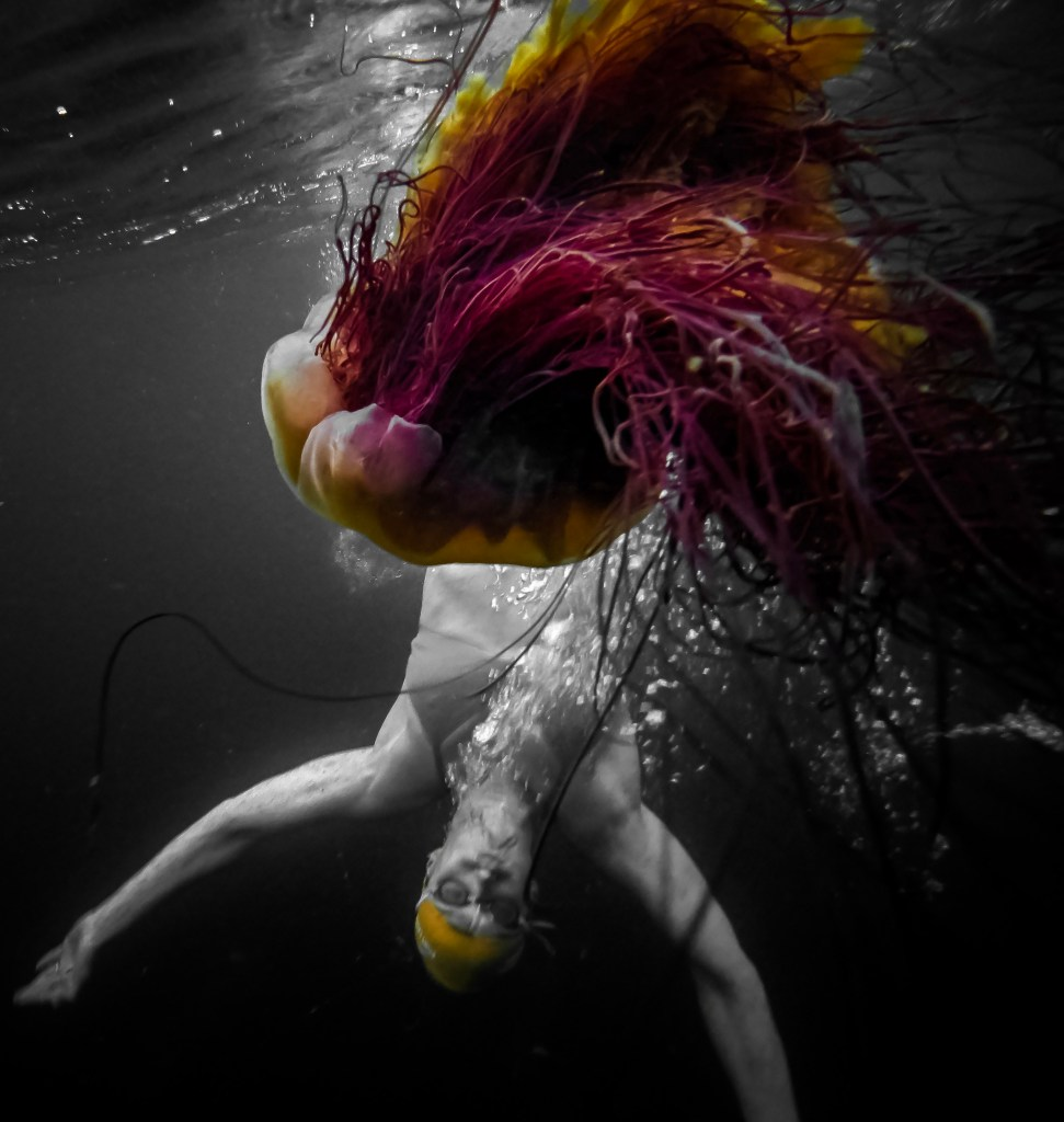 swimmer and jellyfish