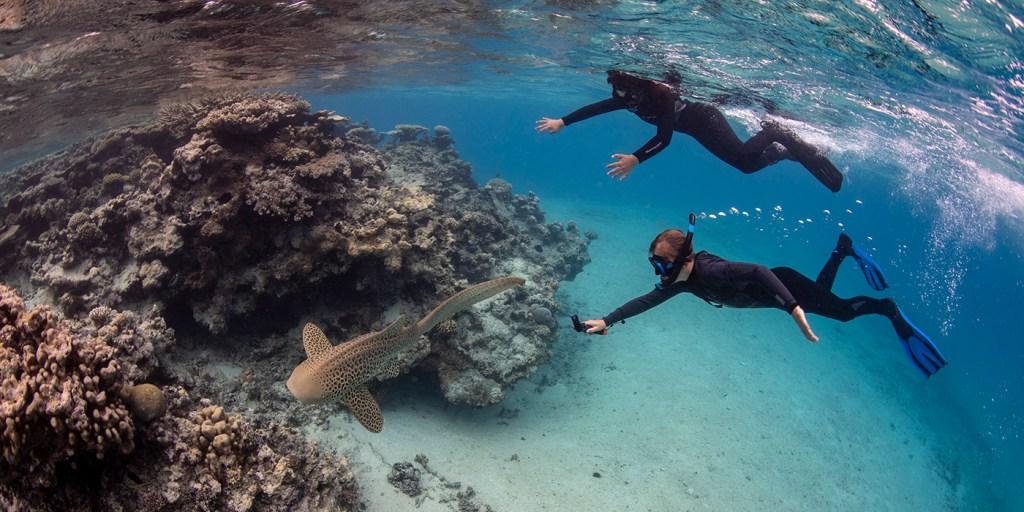 kids and shark underwater