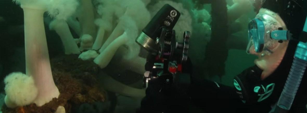 underwater filmmaker