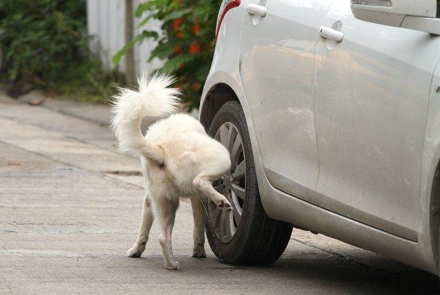 Și pe mașina ta fac cățeii pipi? Uite cum poți evita acest lucru