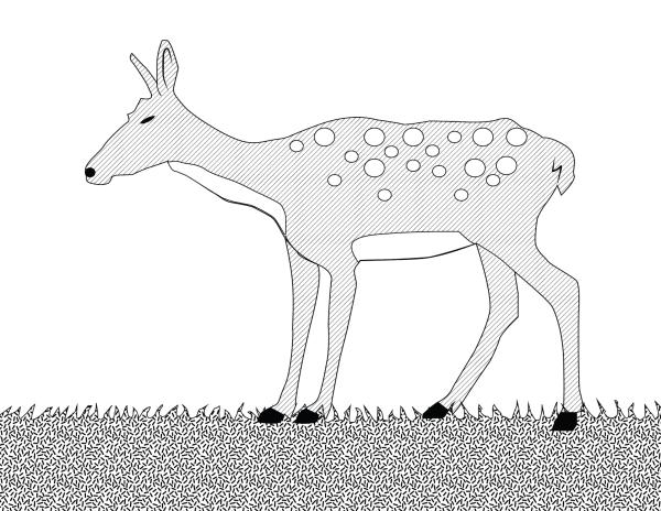 Căprioară
