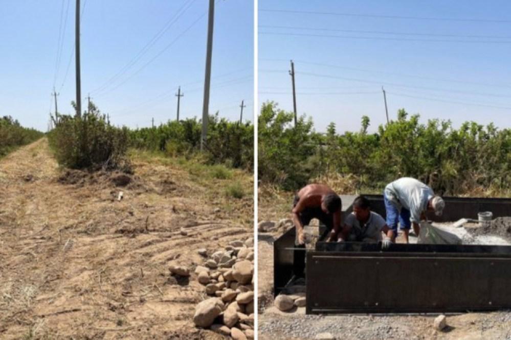 Более 160 тутовых деревьев срубили в Сурхандарье